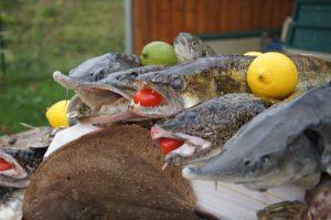 Fisch in Havelberg - Fischsatt im November